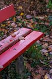 Red bench in the woods, park in autumn royalty free stock images
