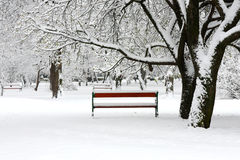 Red benches in a park Royalty Free Stock Photo