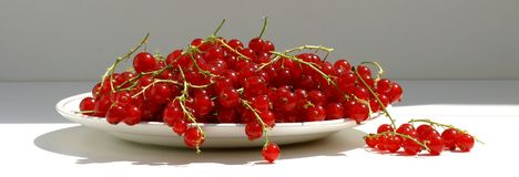 Red berries. Red currants on a plate Stock Images