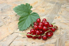 Red berries. And leaf of the red berry Stock Image