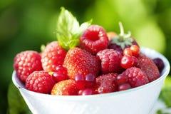 Red berries. Closeup of fresh ripe berries Stock Photo