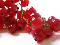 Red Berries. Stemmed red berries on a neutral background Stock Image