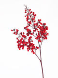 Red berries Royalty Free Stock Image