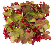 Red berries banner Stock Images