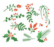 Red Berries, Branches Fir and Leaves. Vector Royalty Free Stock Images