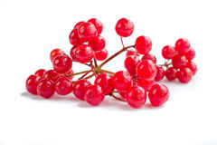 Red berries cluster of guelder rose isolated Royalty Free Stock Photo