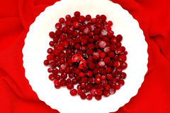 Red berries cranberries on white plate. Red berries and cranberry ladybug on a white plate on a red background Royalty Free Stock Photography