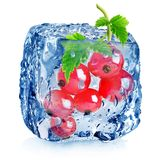 Red berries of currant in ice Royalty Free Stock Photos