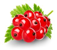 Red berries of currant Royalty Free Stock Image