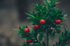 Red berries in the forest stock photos
