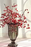 Red berries in glass vase royalty free stock photography