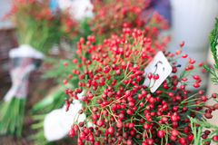 The red berries and the green leaves Royalty Free Stock Photos