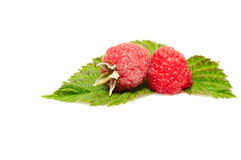 Red berries with green leaves on a white. Stock Image