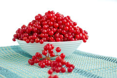 Red berries of guelder rose in white plate on blue underlay. Red berries in plate with dropped-out cluster on blue uderlay Royalty Free Stock Photos