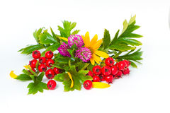 Red berries of hawthorn, clover and flowers. Of Jerusalem artichoke royalty free stock photography