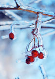 Red berries in the ice. Beautiful red berries in the blue ice Stock Image
