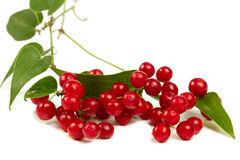 Red berries isolated on white stock image