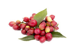 Red Berries And Leaves Of Curry Leaf Tree Stock Photo