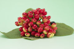 Red berries. With leaves on light green background Royalty Free Stock Images