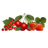 Red berries with leaves. Red ripe juicy berries with leaves royalty free illustration
