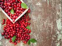 Red berries of organic cornel in a basketed Stock Photo