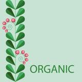 Red berries organic symbol Stock Photography