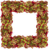 Red berries photo frame Royalty Free Stock Photos