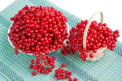 Red berries in plate and basket on blue underlay. Red guelder rose berries in white plate and wicker basket and dropped-out cluster on blue underlay Stock Images