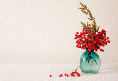 Red berries of Sacred Bamboo. (Place for text) Stock Photography