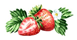 Red berries strawberry with flower and green leaves. Watercolor hand drawn horisontal  illustration  isolated on white background. Red berries strawberry with Royalty Free Stock Photography