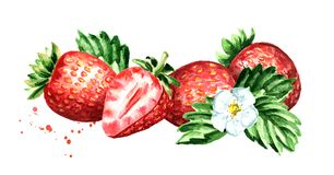 Red berries strawberry horizontal composition. Watercolor hand drawn illustration isolated on white background. royalty free illustration