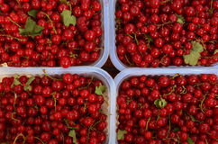 Red Berries Texture. Red Berries bowls in a patagonian market Royalty Free Stock Images