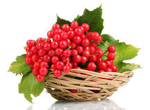 Red berries of viburnum. In basket over the white royalty free stock photography