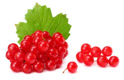 Red berries of Viburnum arrow wood with green leaf isolated on white background Stock Photos