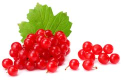 Red berries of Viburnum arrow wood with green leaf isolated on white background Stock Photography