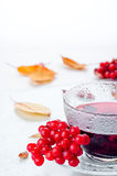 Red berries  viburnum and cup of tea Stock Image
