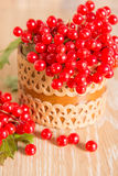 Red berries of viburnum Royalty Free Stock Photography