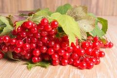 Red berries of viburnum Stock Photo