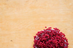 Red berries of viburnum on a plate Stock Photo
