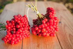 Red berries of viburnum. On a wooden background Stock Photo