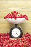 Red berries viburnum on the scales stock photography