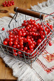 Red berries of viburnum in wire basket Royalty Free Stock Photo