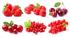Red berries. On a white background stock photos