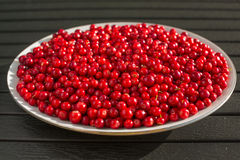 Red berries on a white plate Stock Photo
