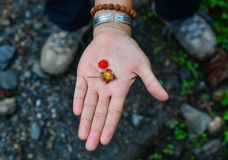 Red berries on a woman hand royalty free stock photo