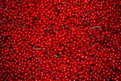 Red berry Royalty Free Stock Photos