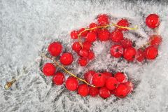 Red berry currant frozen in the ice Royalty Free Stock Image
