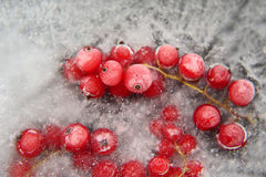 Red berry currant frozen in the ice Stock Image