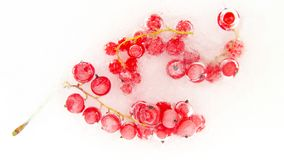 Red berry currant frozen in the ice. Useful vitamin berry fruit food royalty free stock photo