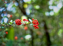 Red berry. In the forest Royalty Free Stock Image